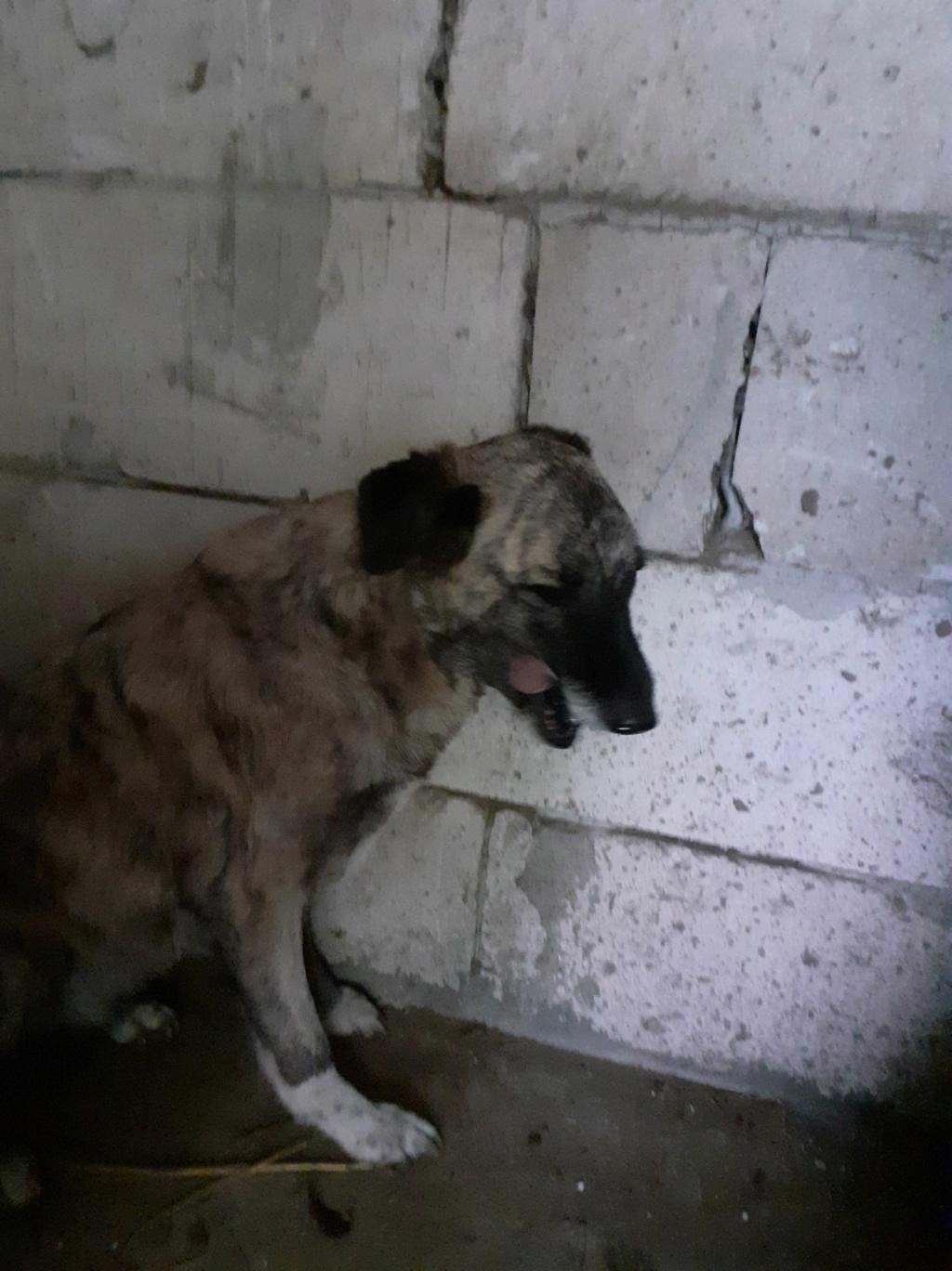 JALIA - Née en 2015 - trouvée errante- marrainée par Manganouchka - SC-R-SOS 12335910
