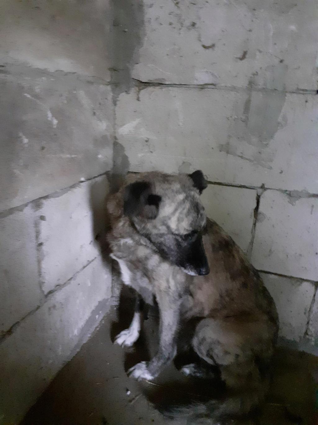 JALIA - Née en 2015 - trouvée errante- marrainée par Manganouchka - SC-R-SOS 12341310
