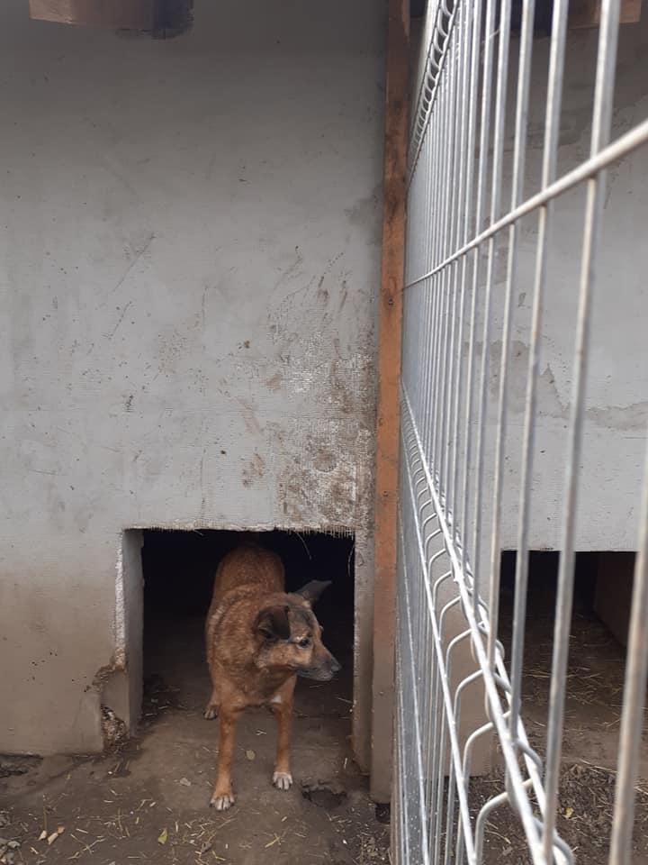 RELKO, croisé berger, né en 2014,sorti de l'équarrissage fin Avril 2017- marrainé par Maousse54 et Yemtsi -R-SC - Page 3 12433013