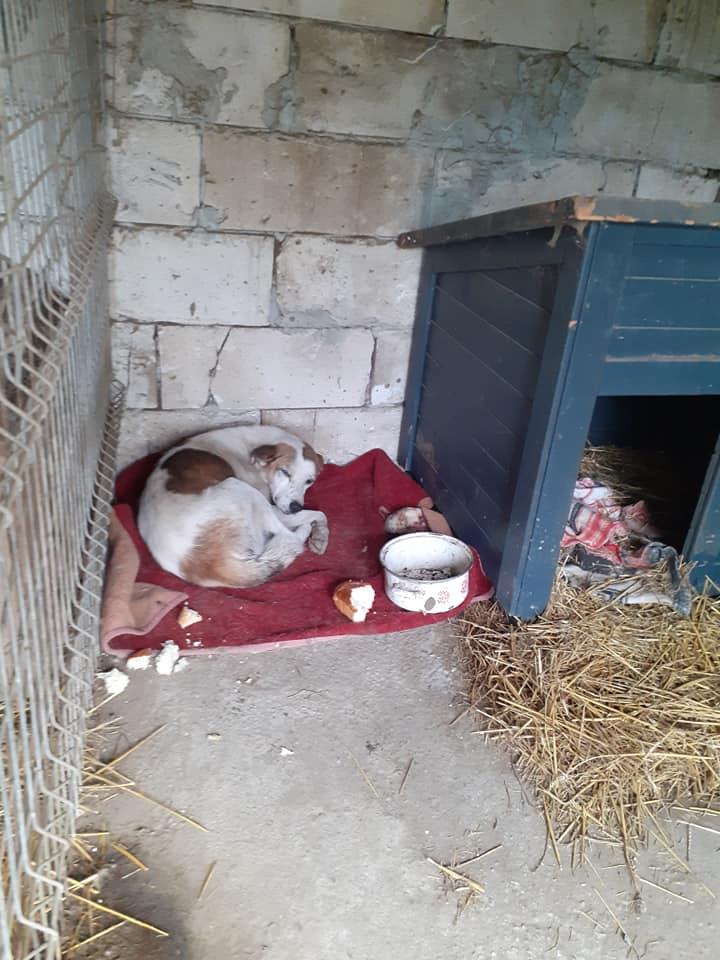 NEISSON, mâle taille moyenne, né en 2010 , trouvé près de Bucarest - parrainé par Sylvie H-R-SC-SOS 12433712