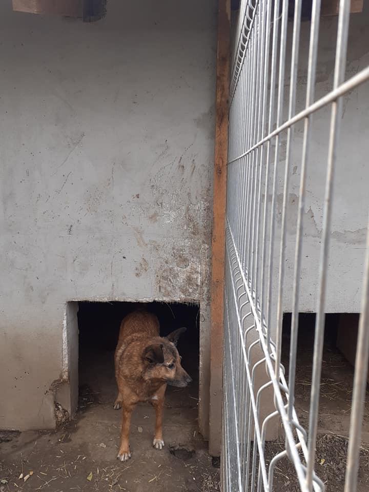 RELKO, croisé berger, né en 2014,sorti de l'équarrissage fin Avril 2017- marrainé par Maousse54 et Yemtsi -R-SC - Page 3 12435411
