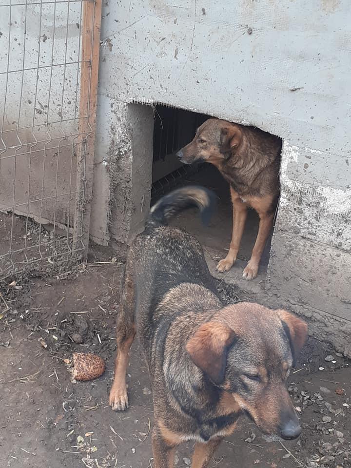 OUZO, né en sept 2017,  croisé berger, frère de Taliya et Nami, trouvé dans la rue en mai 2018 - Parrainé par Viviane -R- - Page 2 12437013