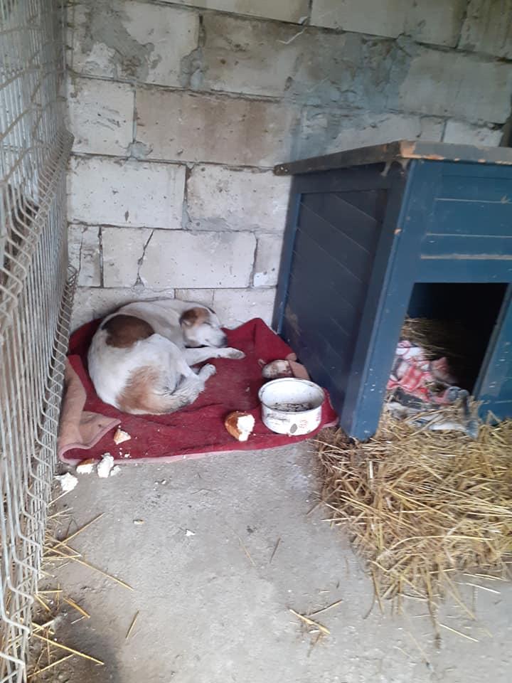 NEISSON, mâle taille moyenne, né en 2010 , trouvé près de Bucarest - parrainé par Sylvie H-R-SC-SOS 12438611