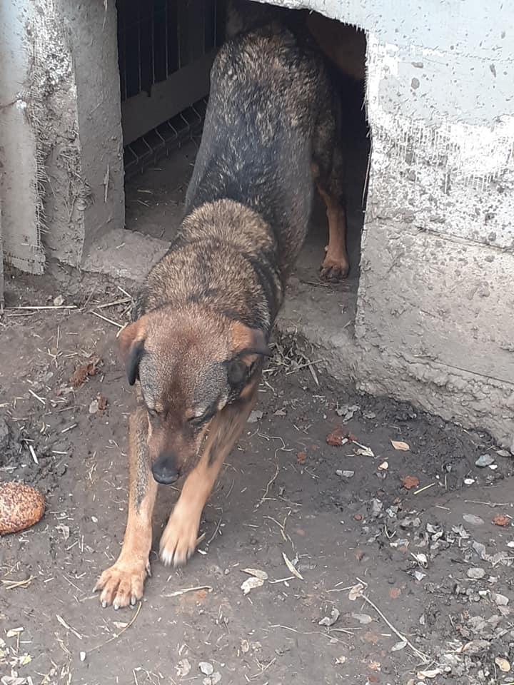 OUZO, né en sept 2017,  croisé berger, frère de Taliya et Nami, trouvé dans la rue en mai 2018 - Parrainé par Viviane -R- - Page 2 12462410