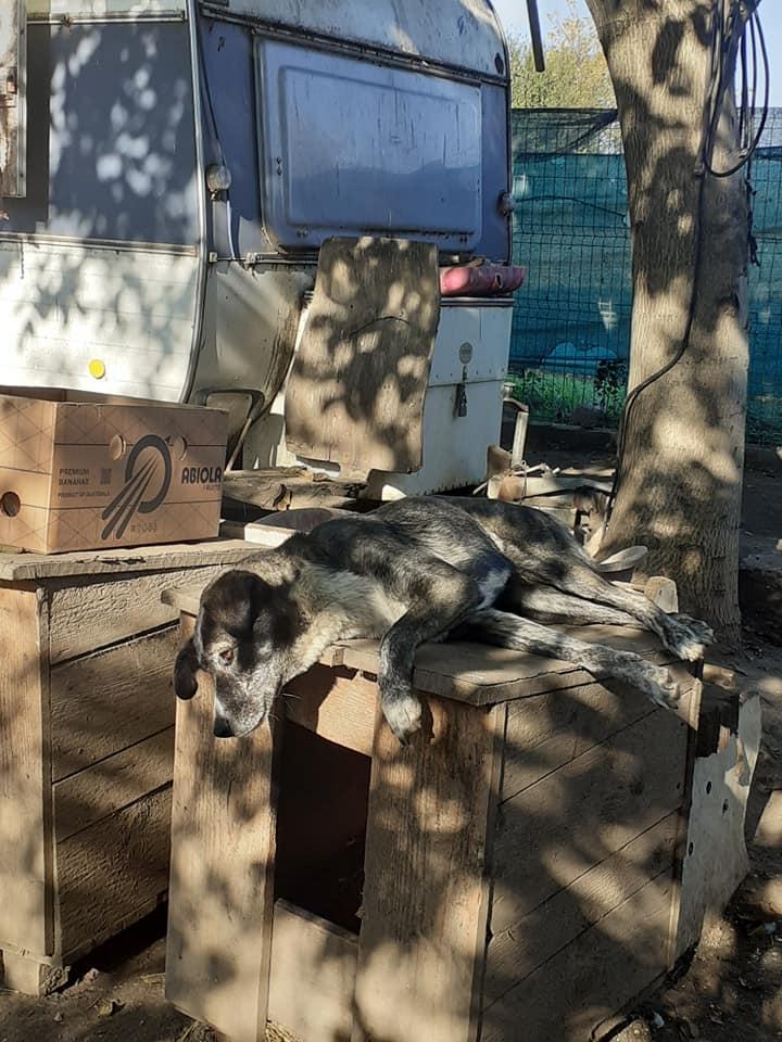 OFELIA -femelle sauvée de pallady - née en Février 2016 - marrainée par Connecticut -SOS-SC-R- - Page 3 12475010