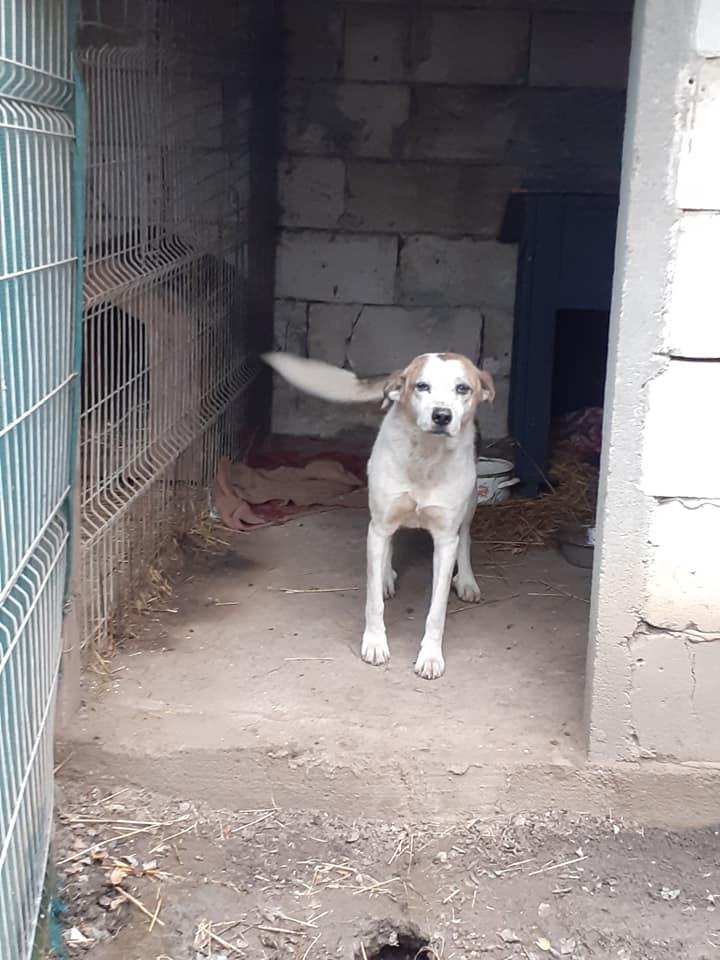 NEISSON, mâle taille moyenne, né en 2010 , trouvé près de Bucarest - parrainé par Sylvie H-R-SC-SOS 12545510