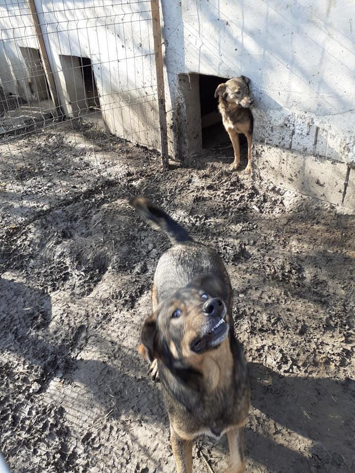 OUZO, né en sept 2017,  croisé berger, frère de Taliya et Nami, trouvé dans la rue en mai 2018 - Parrainé par Viviane -R- - Page 2 12548310
