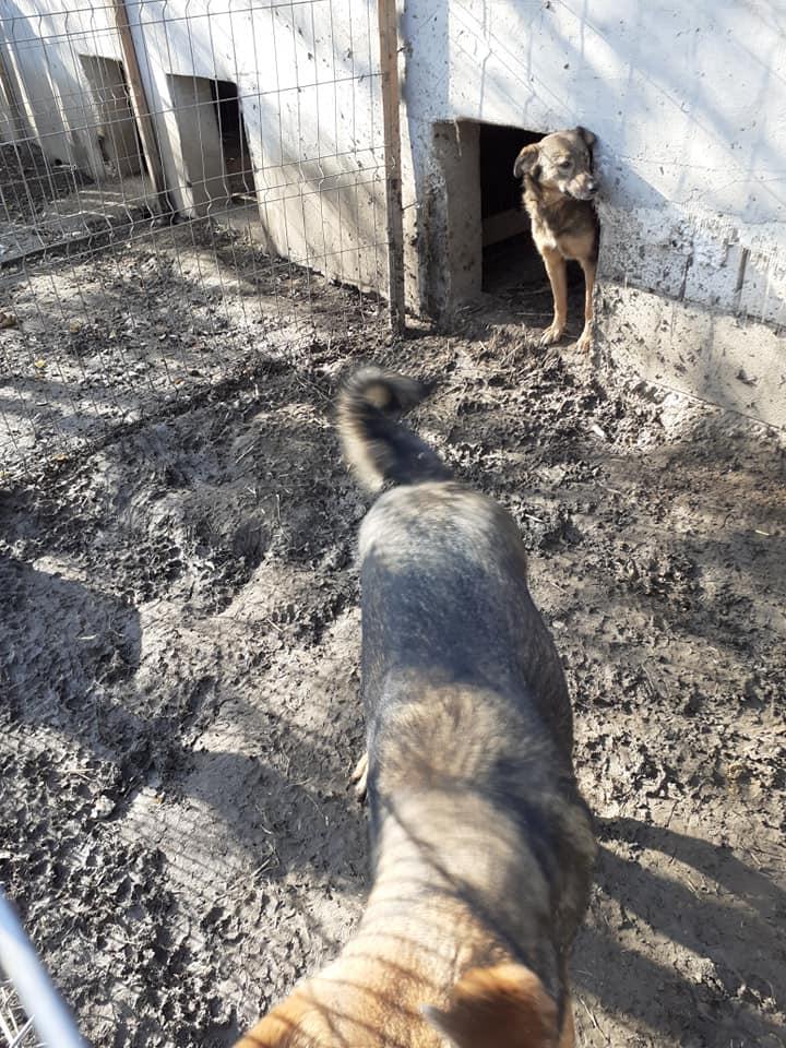 OUZO, né en sept 2017,  croisé berger, frère de Taliya et Nami, trouvé dans la rue en mai 2018 - Parrainé par Viviane -R- - Page 2 12554211