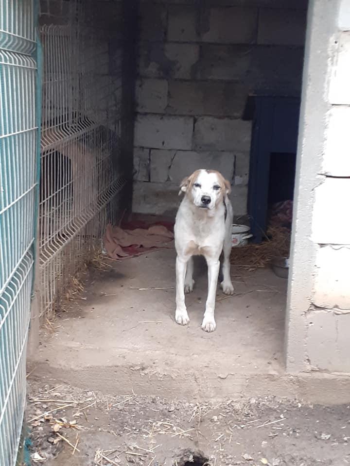 NEISSON, mâle taille moyenne, né en 2010 , trouvé près de Bucarest - parrainé par Sylvie H-R-SC-SOS 12554610