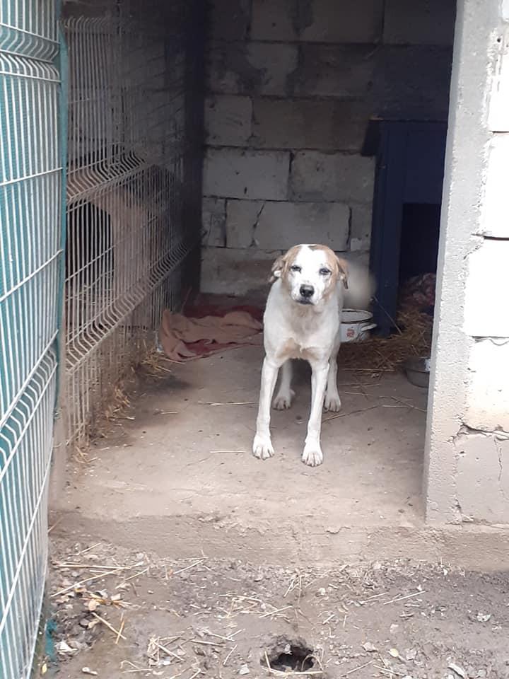NEISSON, mâle taille moyenne, né en 2010 , trouvé près de Bucarest - parrainé par Sylvie H-R-SC-SOS 12554910