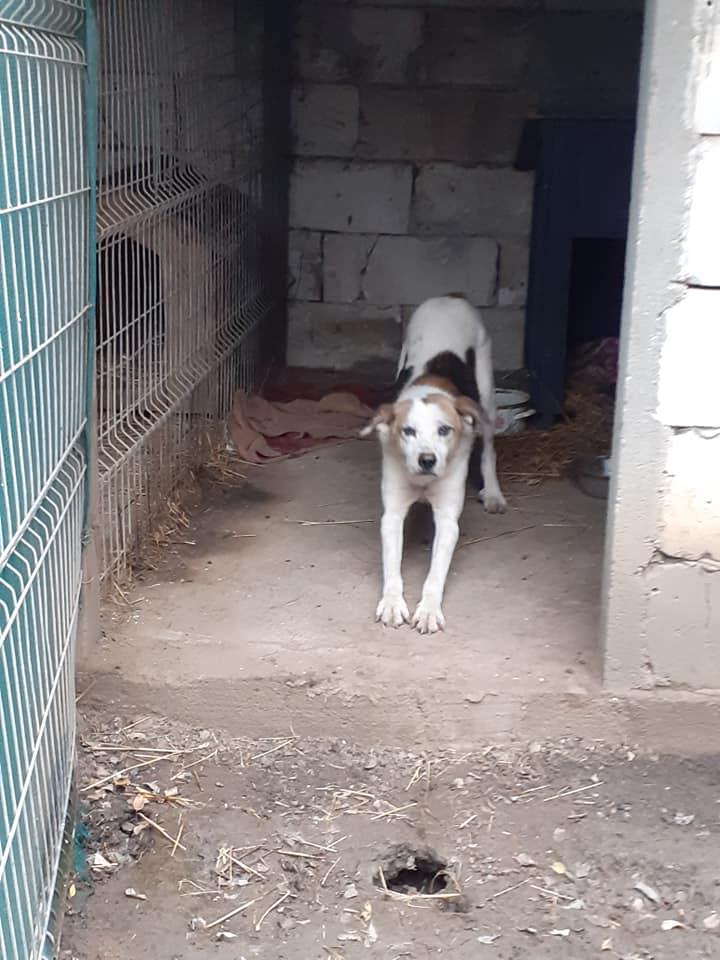 NEISSON, mâle taille moyenne, né en 2010 , trouvé près de Bucarest - parrainé par Sylvie H-R-SC-SOS 12578010