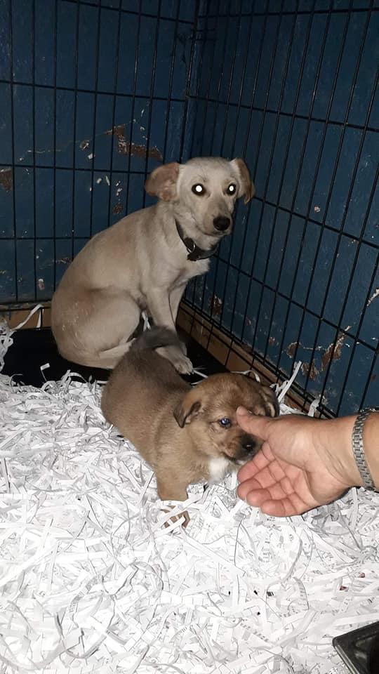 wapi - WAPI petite femelle née en 2018 et son chiot - sauvés de Pallady  le 18/11/2020- parrainée par Elda -R-SOS-SC 12612011