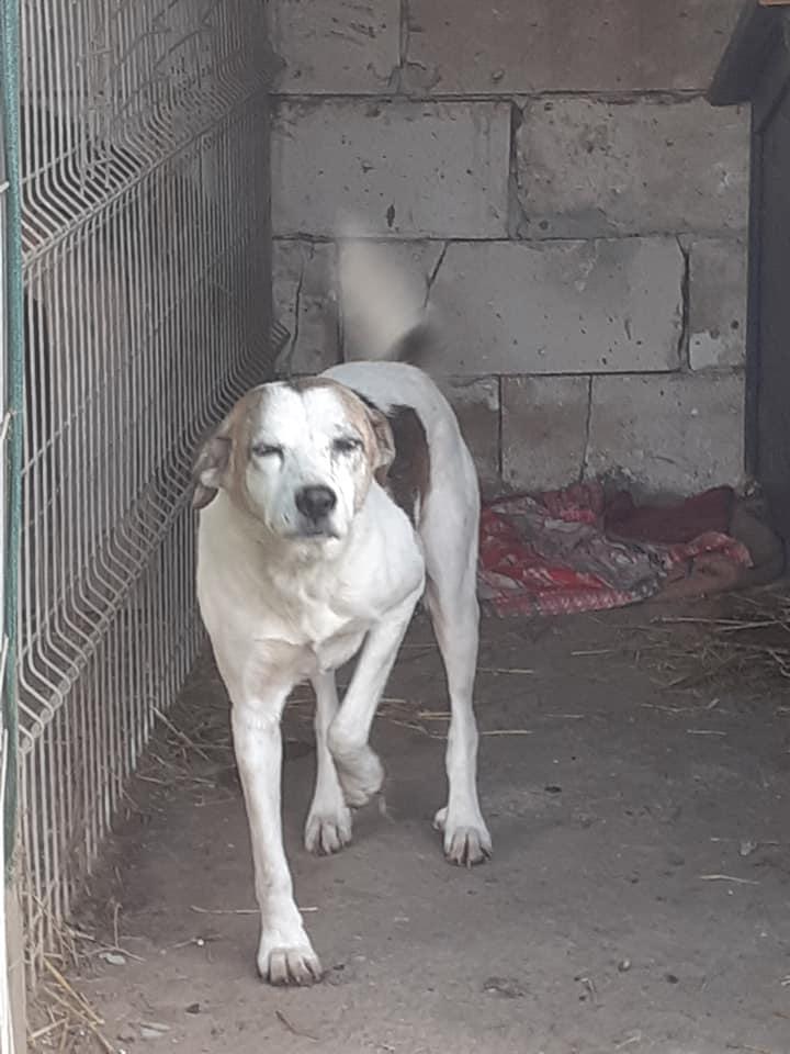 NEISSON, mâle taille moyenne, né en 2010 , trouvé près de Bucarest - parrainé par Sylvie H-R-SC-SOS 12647710