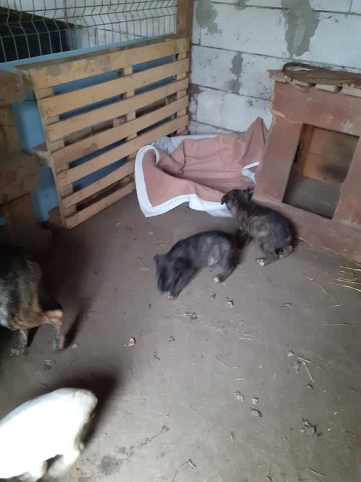 bakari - BAKARI femelle  née en 2018 NR 14014 et ses 3 chiots sauvés de Pallady  le 18/11/2020 - Parrainée par gandalf60350-R-SOS-SC- 12698510