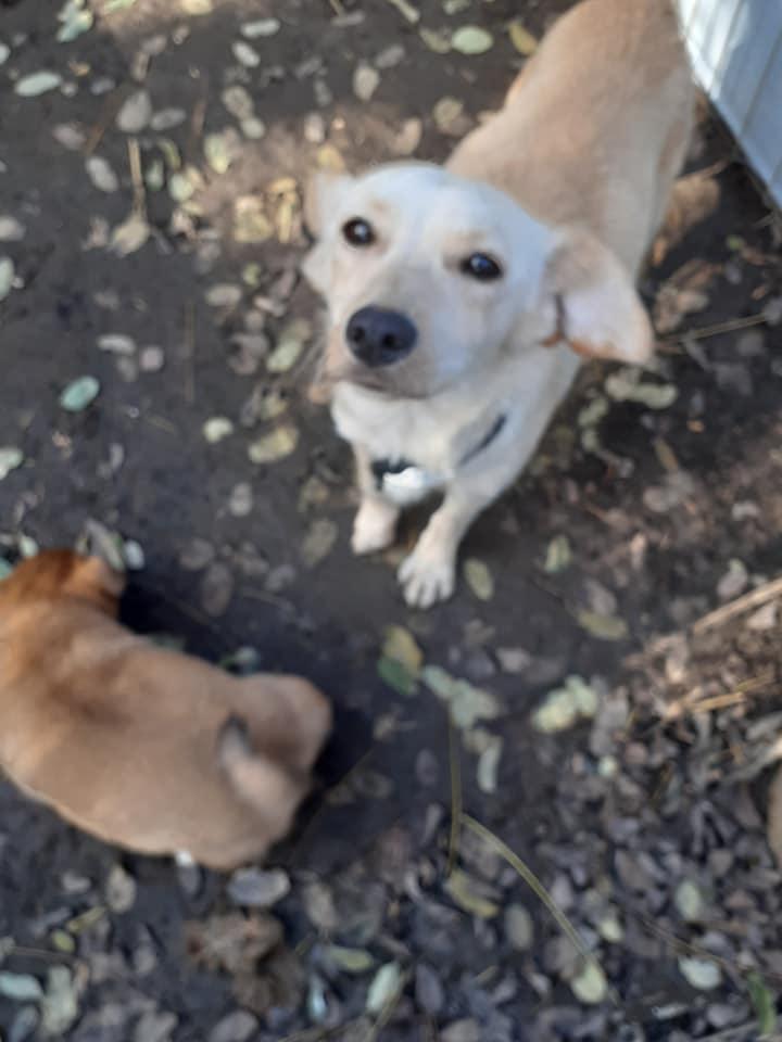 wapi - WAPI petite femelle née en 2018 et son chiot - sauvés de Pallady  le 18/11/2020- parrainée par Elda -R-SOS-SC 12702813