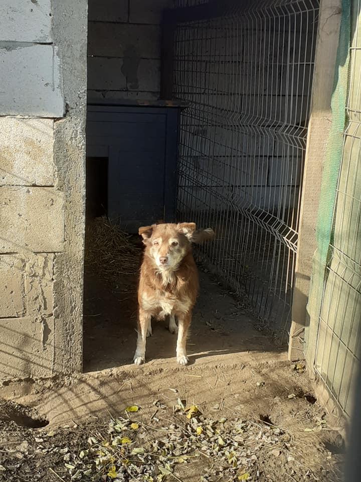 LAORA, femelle rescapée d'Oltenita du 30 avril 2015, née fin 2013, marron roux - marrainée par lilirez2 - SOS-R-SC - Page 3 12703511