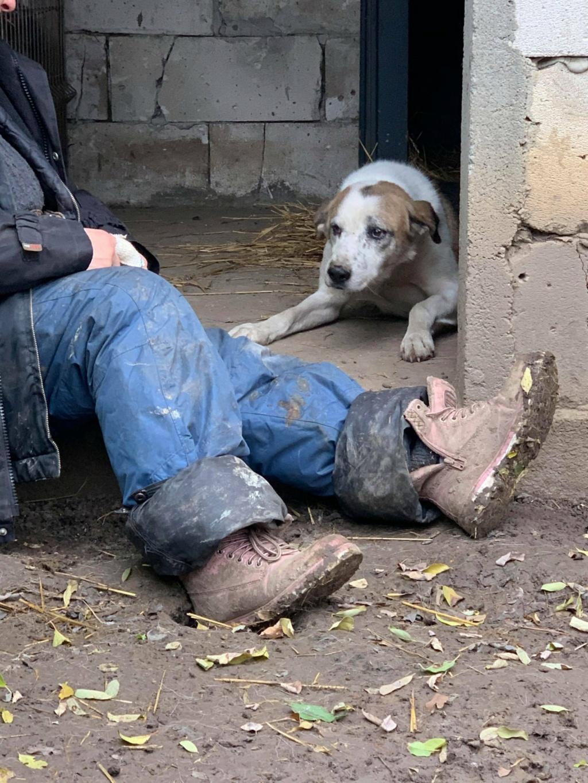 NEISSON, mâle taille moyenne, né en 2010 , trouvé près de Bucarest - parrainé par Sylvie H-R-SC-SOS 12704010