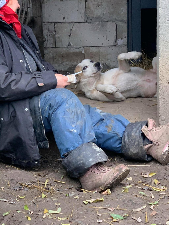 NEISSON, mâle taille moyenne, né en 2010 , trouvé près de Bucarest - parrainé par Sylvie H-R-SC-SOS 12705710