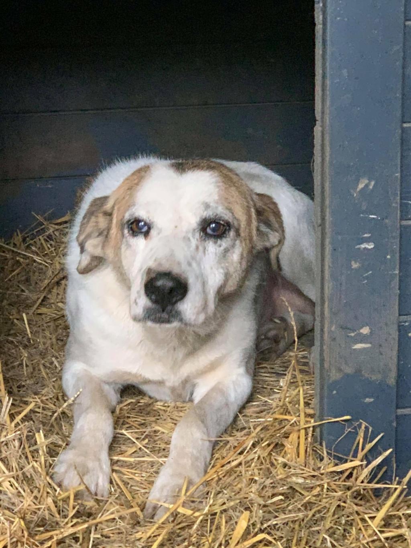 NEISSON, mâle taille moyenne, né en 2010 , trouvé près de Bucarest - parrainé par Sylvie H-R-SC-SOS 12708210