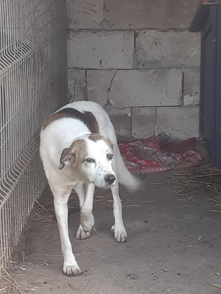 NEISSON, mâle taille moyenne, né en 2010 , trouvé près de Bucarest - parrainé par Sylvie H-R-SC-SOS 12709910