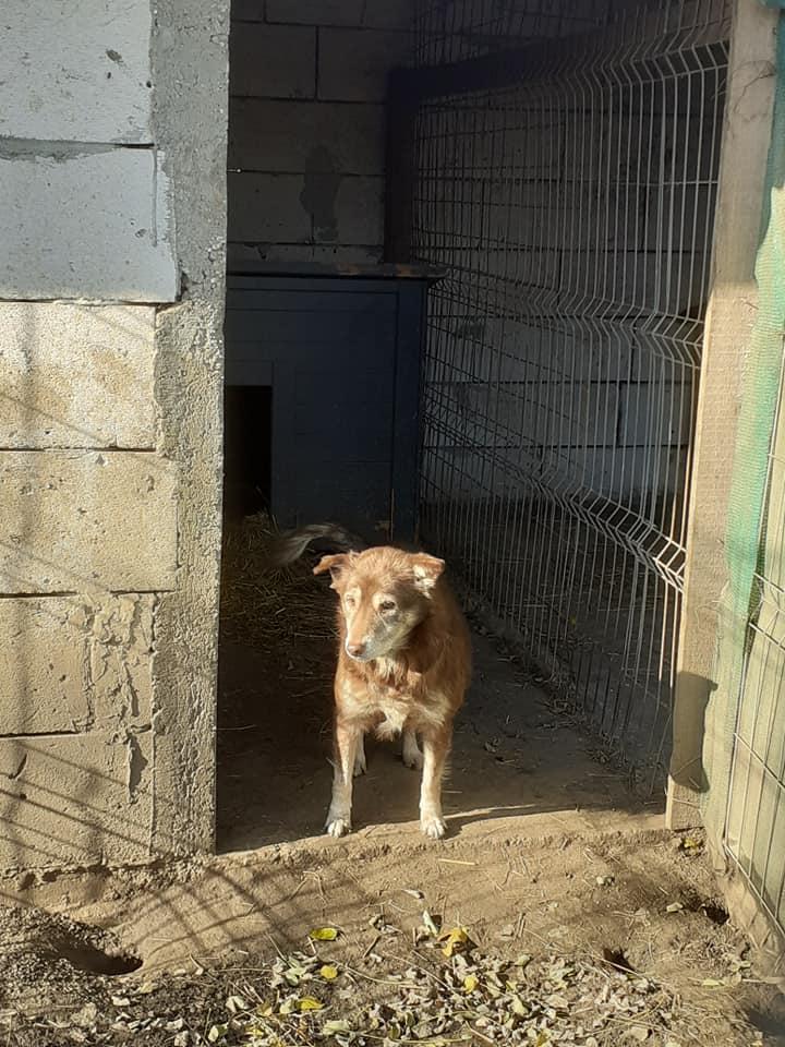 LAORA, femelle rescapée d'Oltenita du 30 avril 2015, née fin 2013, marron roux - marrainée par lilirez2 - SOS-R-SC - Page 3 12713910