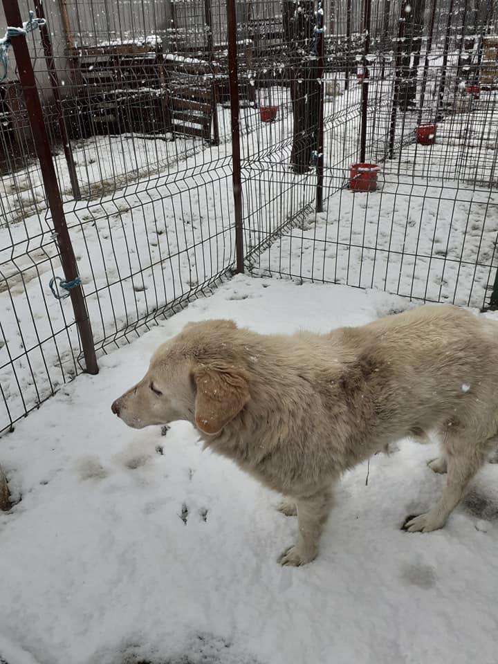 BALANUCH, mâle croisé berger sauvé de Pallady, né en 2009 parrainé par Nathalie G. -Gage Coeur  Myri_Bonnie-SC-R-SOS- - Page 3 12853011