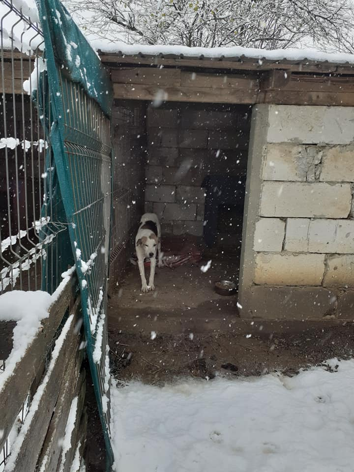 NEISSON, mâle taille moyenne, né en 2010 , trouvé près de Bucarest - parrainé par Sylvie H-R-SC-SOS 12877710