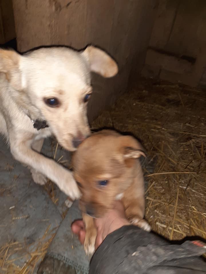 wapi - WAPI petite femelle née en 2018 et son chiot - sauvés de Pallady  le 18/11/2020- parrainée par Elda -R-SOS-SC 13012710