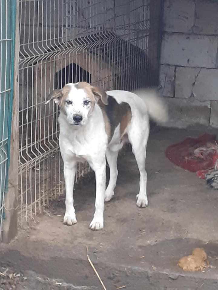 NEISSON, mâle taille moyenne, né en 2010 , trouvé près de Bucarest - parrainé par Sylvie H-R-SC-SOS 13019410