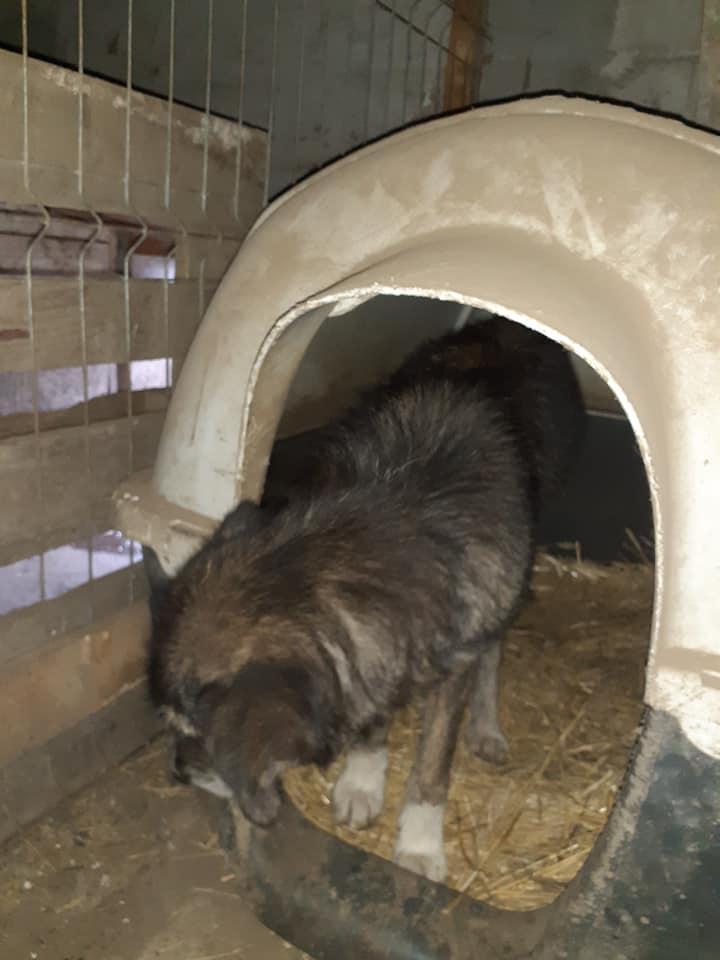 RODA, femelle de taille moyenne née en 2012, trouvée dans la rue - Parrainée par Manganouchka --R-SOS-SC 13022115