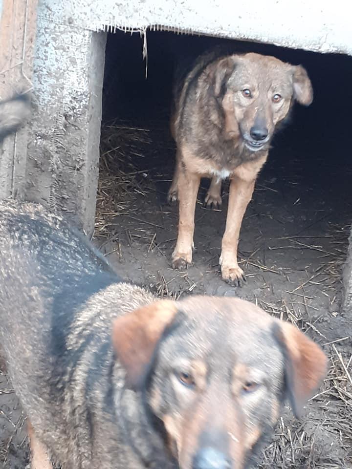 OUZO, né en sept 2017,  croisé berger, frère de Taliya et Nami, trouvé dans la rue en mai 2018 - Parrainé par Viviane -R- - Page 2 13023511