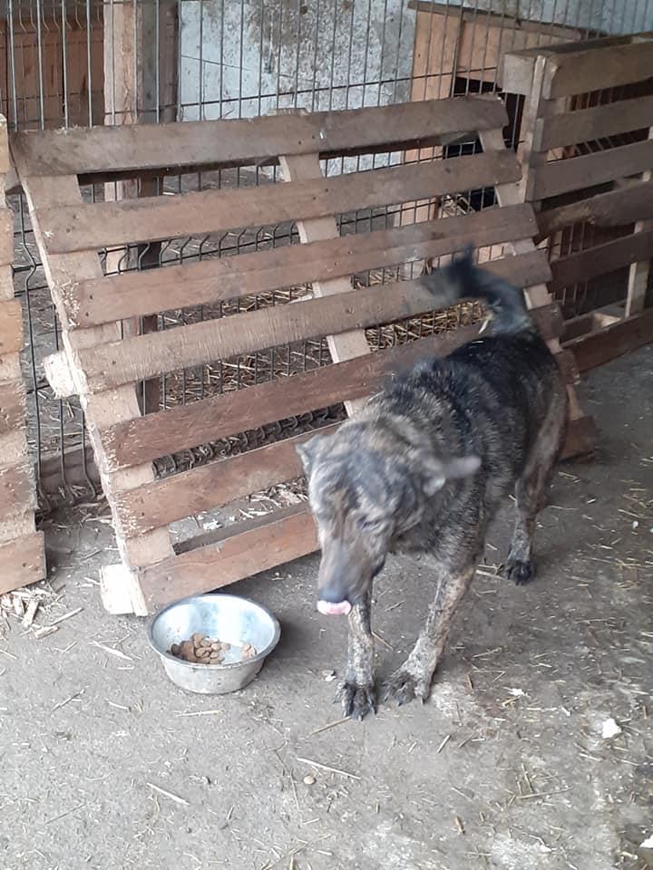 ARRY, mâle né en 2013, récupéré suite à l'avis d'expulsion du refuge de Radu- marrainé par Bouffy-R-SC-SOS 13025315