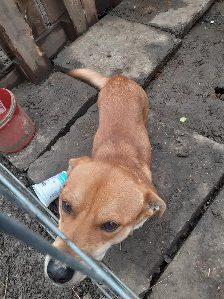 ramzy - RAMZY, mâle de petite taille né en 2019, trouvé dans la rue- parrainé par coco65  - R-SOS-SC 13026210
