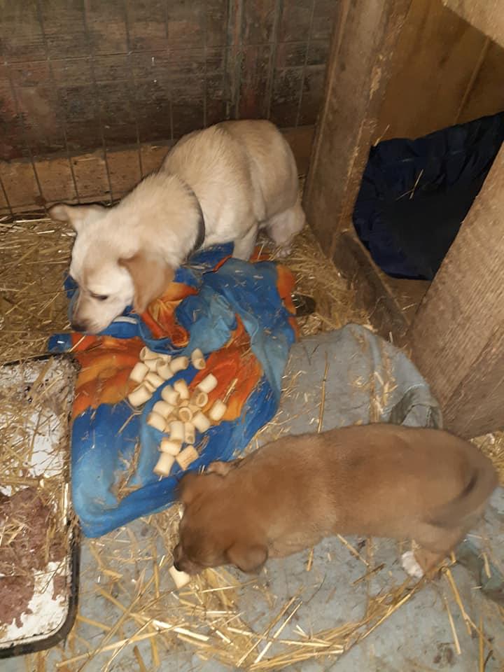 wapi - WAPI petite femelle née en 2018 et son chiot - sauvés de Pallady  le 18/11/2020- parrainée par Elda -R-SOS-SC 13041310