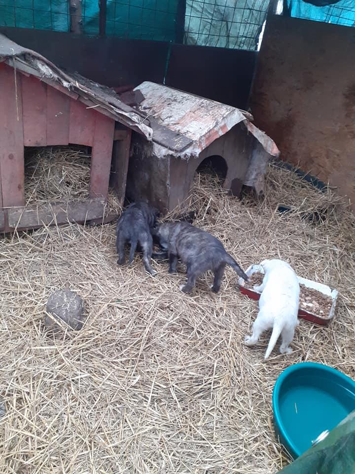 bakari - BAKARI femelle  née en 2018 NR 14014 et ses 3 chiots sauvés de Pallady  le 18/11/2020 - Parrainée par gandalf60350-R-SOS-SC- 13100810
