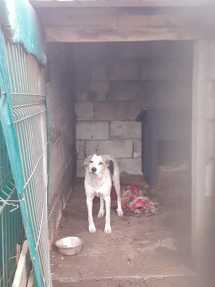 NEISSON, mâle taille moyenne, né en 2010 , trouvé près de Bucarest - parrainé par Sylvie H-R-SC-SOS 13101411