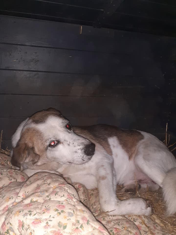 NEISSON, mâle taille moyenne, né en 2010 , trouvé près de Bucarest - parrainé par Sylvie H-R-SC-SOS 13192712