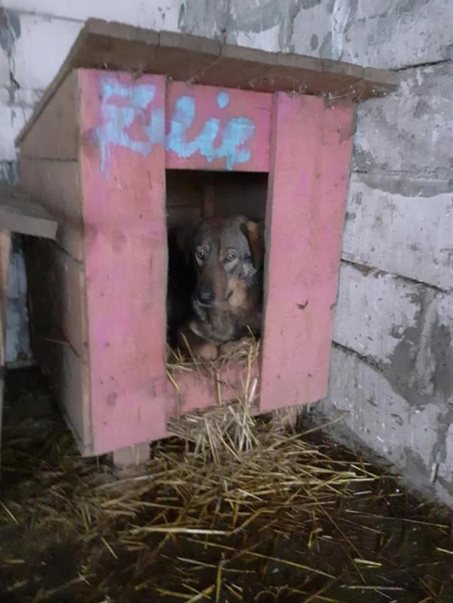 NAMI, croisé berger, soeur de Taliya et Ouzo, trouvée dans la rue en mai 2018- marrainée par Guyenne -R- - Page 2 13192725