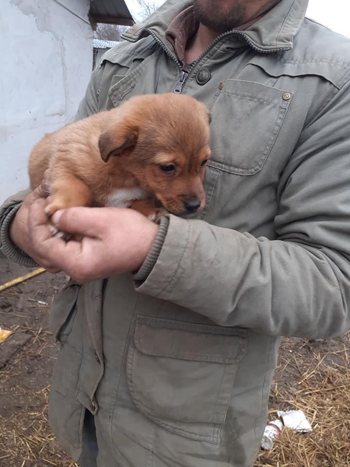 wapi - WAPI petite femelle née en 2018 et son chiot - sauvés de Pallady  le 18/11/2020- parrainée par Elda -R-SOS-SC 13193710