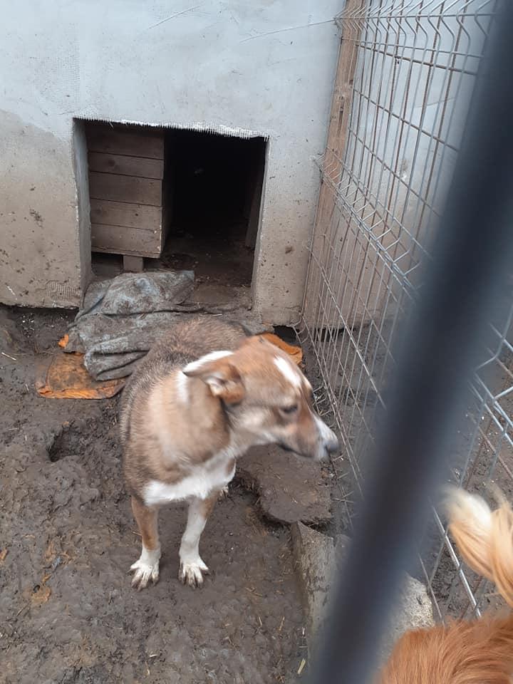 Djoulaï, femelle, taille moyenne, née en 2018, trouvée errante près du village- parrainée par Flomyspra -R-SC-SOS 13203916