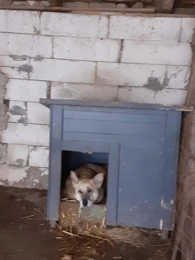 IPSY, née en 2008 sauvée de Mihailesti le 16 Avril 2018 - marrainée par Hashleyalex-R-SC-SOS 13211113