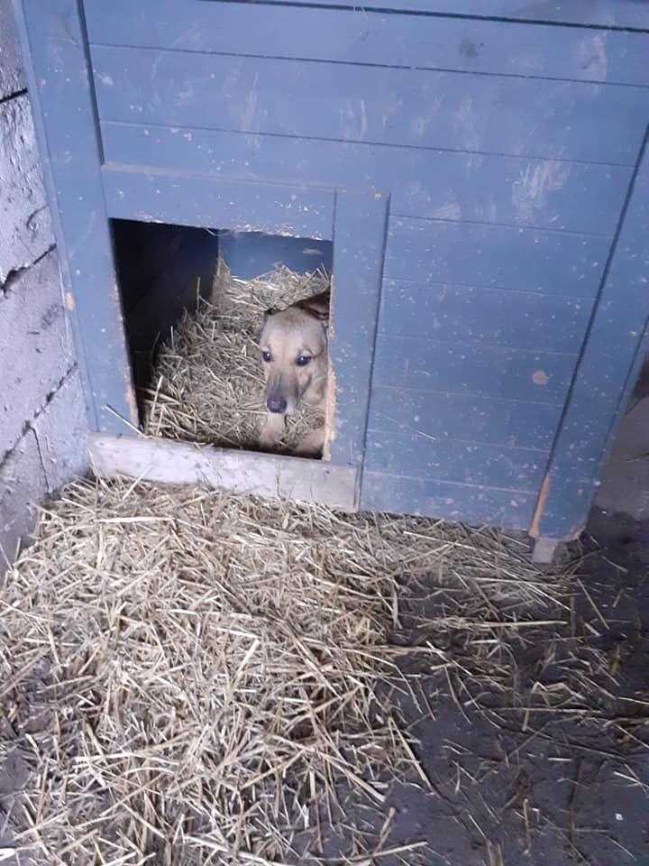LOONA - femelle née le 09/08/2012, EN FA DANS LE 92 - sortie de l'équarrissage le 08/09/2020 - Parrainée par Sylvie H. SC-SOS-R-30MA- 13221110