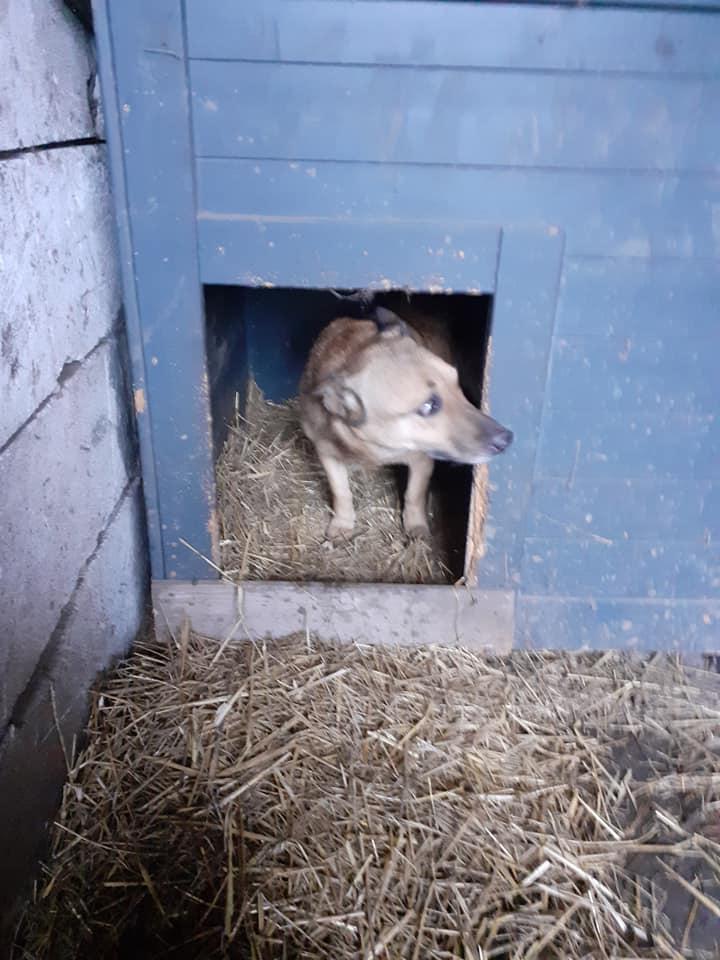 LOONA - femelle née le 09/08/2012, EN FA DANS LE 92 - sortie de l'équarrissage le 08/09/2020 - Parrainée par Sylvie H. SC-SOS-R-30MA- 13223510
