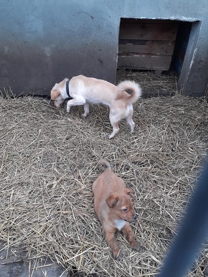 wapi - WAPI petite femelle née en 2018 et son chiot - sauvés de Pallady  le 18/11/2020- parrainée par Elda -R-SOS-SC 13562010