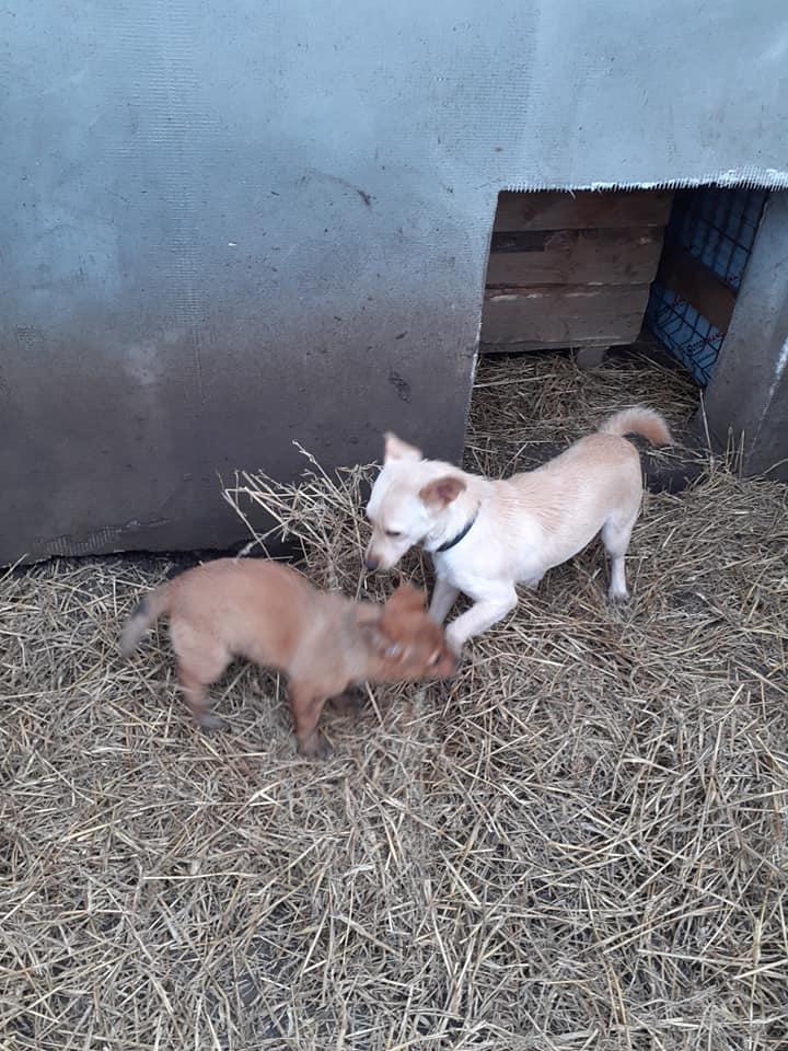 wapi - WAPI petite femelle née en 2018 et son chiot - sauvés de Pallady  le 18/11/2020- parrainée par Elda -R-SOS-SC 13573211