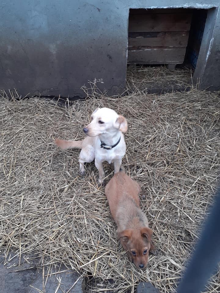 wapi - WAPI petite femelle née en 2018 et son chiot - sauvés de Pallady  le 18/11/2020- parrainée par Elda -R-SOS-SC 13576812