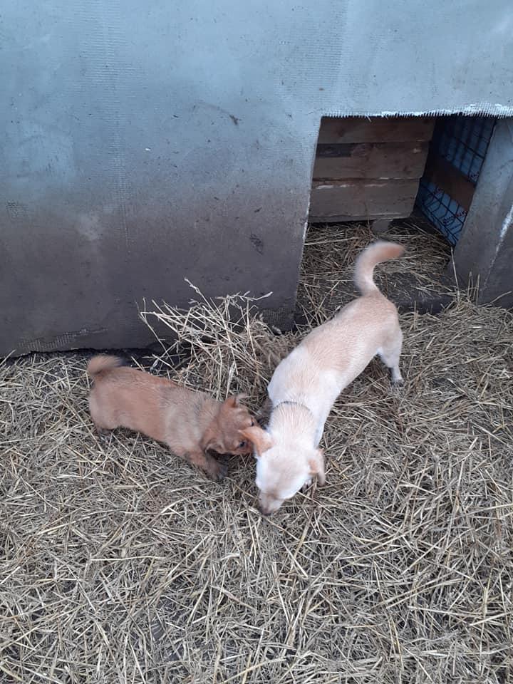 wapi - WAPI petite femelle née en 2018 et son chiot - sauvés de Pallady  le 18/11/2020- parrainée par Elda -R-SOS-SC 13589311