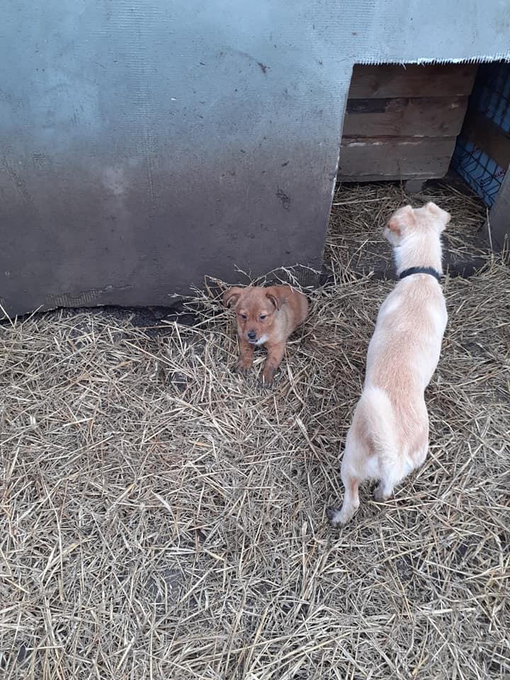 wapi - WAPI petite femelle née en 2018 et son chiot - sauvés de Pallady  le 18/11/2020- parrainée par Elda -R-SOS-SC 13614411
