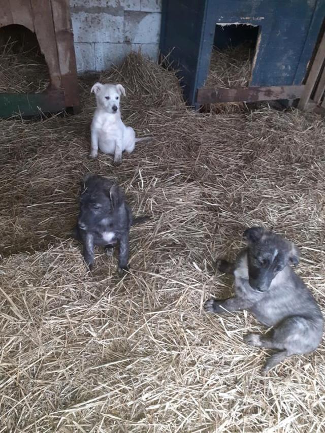 BLACK-PEARL, mâle noir né en Septembre 2020, Nr 14015.Bébé de Bakari-R-SOS-SC 13722713