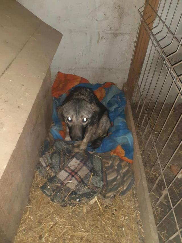 RALFY - né en 2019 - taille moyenne, trouvé enfermé dans un sac-R-SOS-SC 13723511